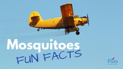 Mosquitoes fun facts